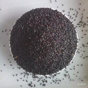 黑米 米面粮油批发 补血佳品 粗粮杂粮批发黑大米 500克五谷杂粮
