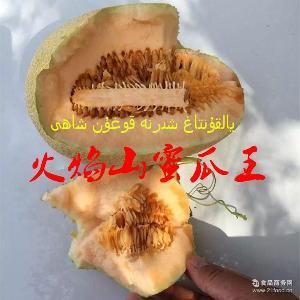【自营】新疆哈密瓜西州蜜25号新鲜水果 蜜瓜净果16斤装一箱4个装