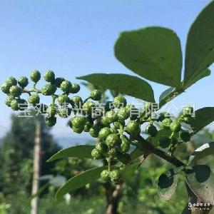凤县花椒 厂家生产干红花椒 青花椒 质优价廉