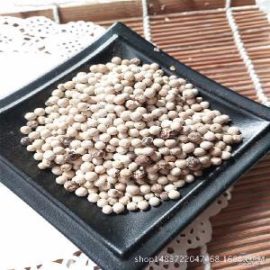 大量批发优质白胡椒粒 火锅调味香料白胡椒散装厂家直销