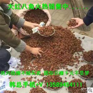 地摊货源跑江湖产品大红八角厂家批发营养八角茴香料批发