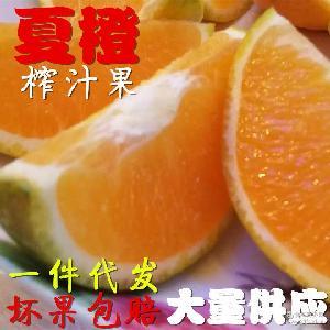 【热销】新鲜橙子现摘夏橙5斤包邮榨汁水果脐橙果径50至65mm酸甜