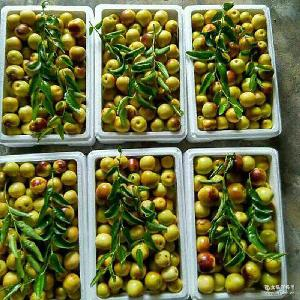 优质山东大冬枣 新鲜水果批发量大从优 冬枣产地沾化自产自销