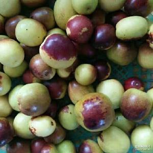 绿色有机皮薄多汁 冬枣原产地沾化直销新鲜大冬枣