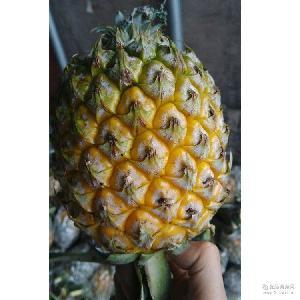 凤梨 批发直销 香甜多汁 新鲜菠萝 【嘉吉贸易】水果