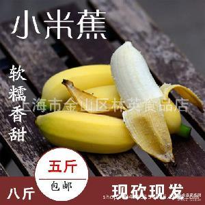 广西小米蕉鸡蕉粉蕉新鲜香蕉水果5斤8斤包邮 可一件代发
