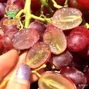【集果网】新鲜水果澳洲红提澳大利亚进口无籽红提子2斤顺丰包邮