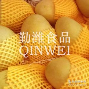 富含维生素和胡萝卜素 芒果 新鲜营养 热带水果 勤潍食品