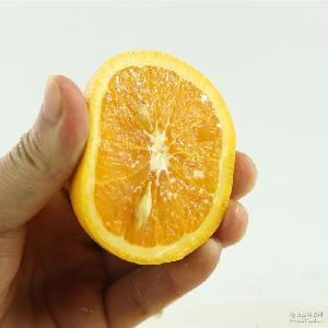 时令水果橙子多汁夏橙 湖北秭归脐橙 一件代发 10斤装现摘发货