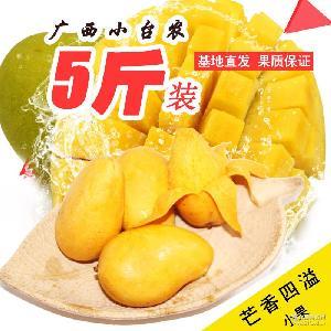 广西百色小台农芒果批发5斤小果包邮新鲜热带水果一件代发诚招代