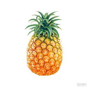 香甜特产凤梨水果批发 当季海南菠萝一件代发 国产精品新鲜水果
