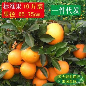 纯天然绿色美容食品10斤包邮 橙子 赣南脐橙 一件代发 新鲜水果