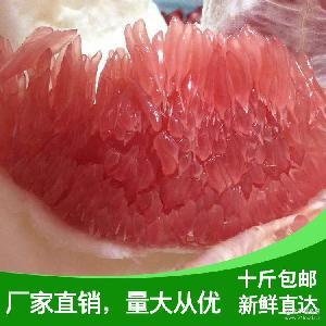 香甜红心柚子 产地直销优质红心蜜柚现摘新鲜红心柚特产水果批发