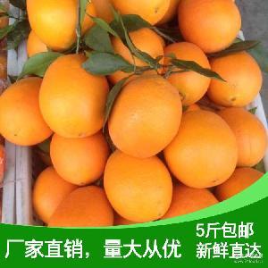 产地直销长红橙子优质脐橙5斤包邮果园直发新鲜橙子榨汁水果产地