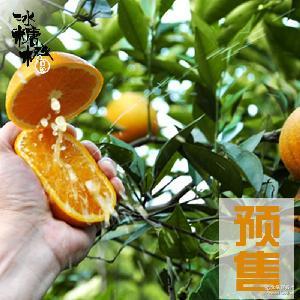 新鲜橙子批发一件代发 预售麻阳冰糖橙大果新鲜甜橙绿色水果8斤
