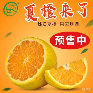 新鲜水果橙子现摘现发酸甜可口时令孕妇水果5斤包邮 秭归脐橙夏橙