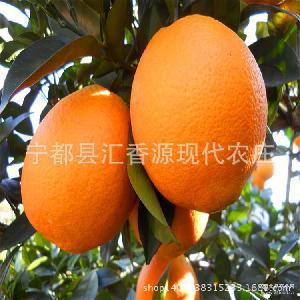 果园直销 江西特产 孕妇新鲜水果 2017热销有机橙子 赣南脐橙批发