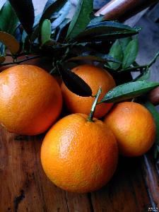 现摘现发新鲜脐橙一件代发 秭归脐橙 果园天然无污染水果批发