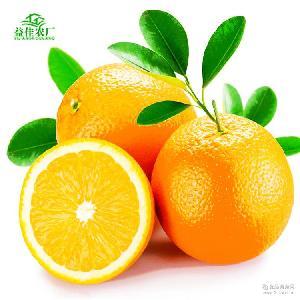 秭归脐橙夏金口感超过伦晚4.5斤装现摘果园新鲜天然水果一件代发