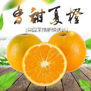 果园现摘现发有机脐橙 批发新鲜橙子夏橙