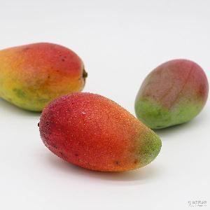 5斤装 海南树上熟贵妃芒 包邮售后热带芒果 新鲜现摘 收到即食