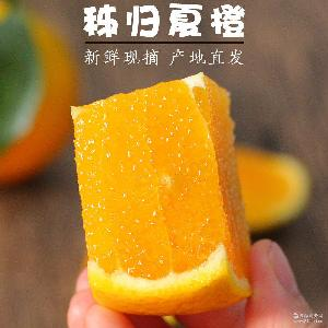 秭归夏橙当季橙子 5斤装 非赣南脐橙伦晚 新鲜包邮水果 榨汁橙