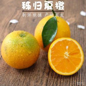 榨汁橙 新鲜包邮水果 秭归夏橙当季橙子 9斤装 非赣南脐橙伦晚