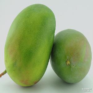 大芒果新鲜芒果5KG/盒 凯特芒果新鲜水果特价 全国包邮
