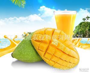 新鲜越南玉芒 现货销售 热带天然有机大芒果 新鲜特产水果