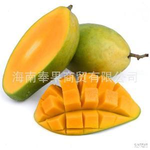 果园现摘新鲜芒果 金煌芒果王 8斤装 果园自产自销 芒果批发