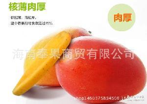 批发 芒果 红金龙 新鲜水果 广西芒果 贵妃芒 果园 皮薄核小