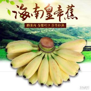 海南皇帝蕉 原产地直销批发海南香蕉 优质新鲜水果海南皇帝香蕉