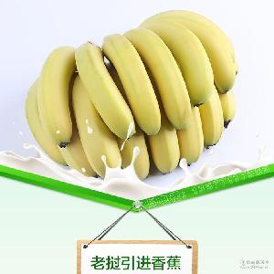 产地直销批发老挝进口香蕉 老挝引进香蕉 优质新鲜水果