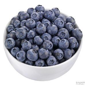 一件代发 成都蓝莓莱克西500g中果12-14mm 现货顺丰