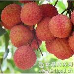 岭南名果:新鲜荔枝超低价特惠全国包邮138元5kg/箱