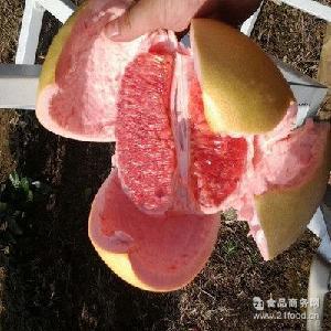 现摘红心蜜柚 红心蜜柚 孕妇吃红肉蜜柚