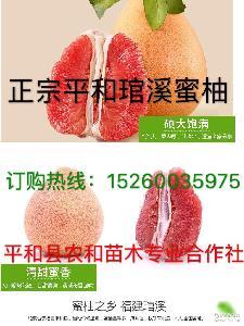 福建平和正宗琯溪蜜柚鸳鸯柚(三红 白 预售9月中旬开始陆续发货