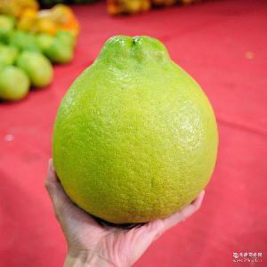 梅州特产单果重3斤+ 纯天然精品柚子批发 2015新鲜沙田柚 金柚