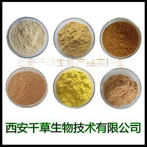 大叶桉叶浓缩粉 厂家专业生产纯天然动植物提取物粉