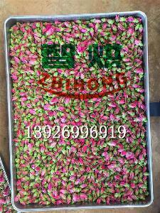 智烘牌用电量减少一半的玫瑰花烘干设备ZH-JN-HGJ03