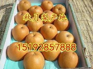 今年的秋月梨主产地价格