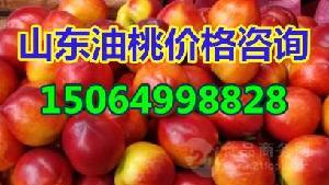 2018年大棚油桃价格山东油桃价格