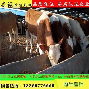 改良西门塔尔牛犊价格 长势快的牛 300斤牛犊价格 公牛 包成活