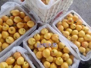 今年的山东大棚油桃批发价格及产地价格