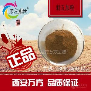 优质植物生粉 刺五加粉 99% 刺五加提取物 刺五加生粉 厂家直销