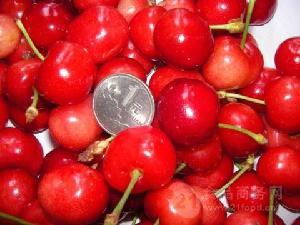 今年的大樱桃行情走势 山东省大樱桃价格行情