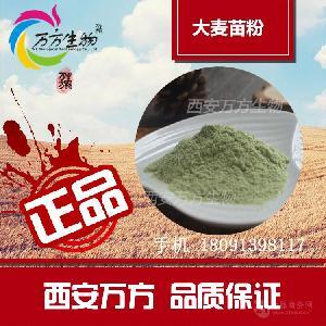 厂家直销 大麦苗粉 大麦苗提取物 大麦苗粗膳食纤维80目 易吸收