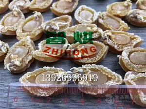 智烘鲍鱼干燥设备厂家ZH-JN-HGJ03烘干品质高