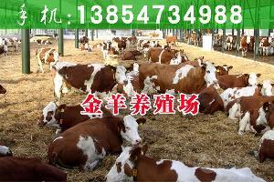 小黄牛多少钱