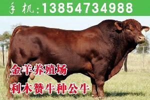 黄牛品种大全